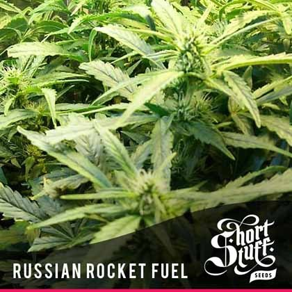 Russian rocket fuel auto