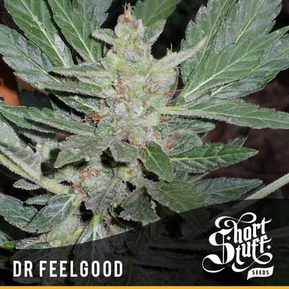 Dr Feelgood auto