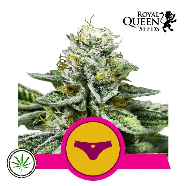 Sherbet Queen