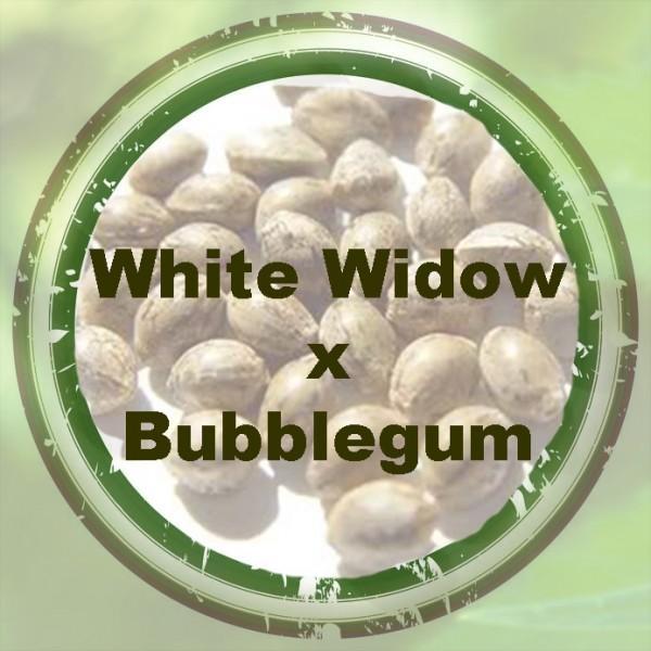 White Widow x Bubblegum