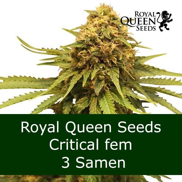 3 Seeds Critical fem - RQS Bonus