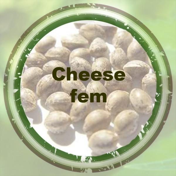 Cheese fem